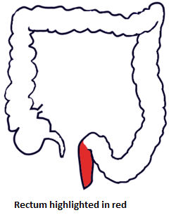 1-rectum-highlighted-in-red